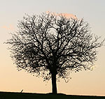 Photo of tree