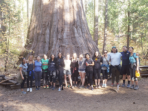 OB residents by a giant sequoia tree